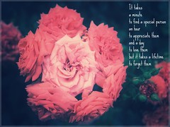 For Jennifer (amarilloladi) Tags: fadedrose rosegrowth tributetoafriend cancer death grief friendship roses coralroses jennifer roseinroses