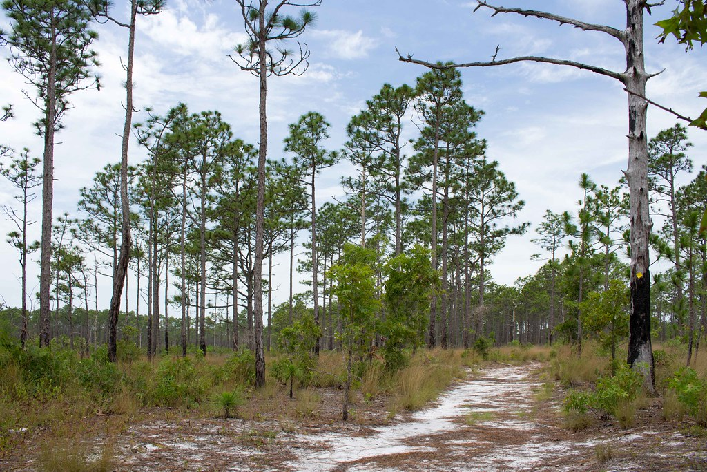 The world 39 s best photos of burn and travel flickr hive mind for Croatan national forest cabins