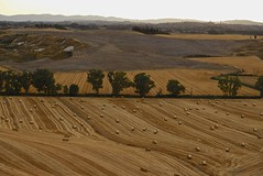 Summer in the Crete Senesi [EXPLORE] (Antonio Cinotti ) Tags: landscape paesaggio toscana tuscany italy italia siena hills colline campagnatoscana cretesenesi asciano leica leicat explore
