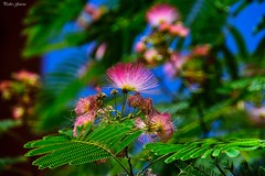 Street colors (Peideluo) Tags: colores calle arbol tree street flowers