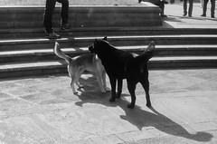 plaza de la constitucion (Cosmopolita.) Tags: 35mm analoga santiago byn bw leica m3 fuji acros 100 asas dogs perros