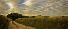 taking the old road home (HHH Honey) Tags: sonya7rii wiltshire salisburyplain summer 117picturesin2017 crops farming on1 onone tokina2035mmlens tokina clouds cloudscape impressionism sunset golden goldenlight 86it'sbeenalongday it'sbeenalongday 86