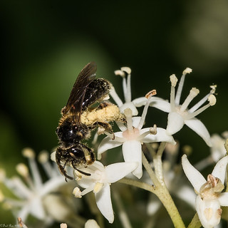 Pollination in action (Explored)
