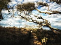 Pea Island (BB Wylie Walden) Tags: obx peaisland iphoneography windblown peaislandnationalwildliferefuge