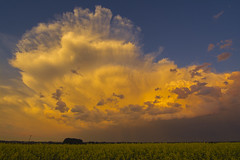 Looking east at sunset (Len Langevin) Tags: sunset storm stormy thunder clouds sky canola alberta landscape weather nikon d7100 tokina 1116