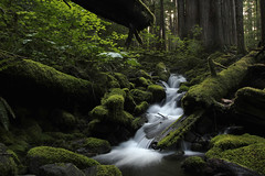 Being...... (McCoy352) Tags: creek moss solitude private special water soul awesome forest olympics maples light shadows