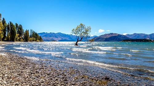 That Wanaka Tree-7