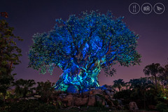 The Tree of Colourful Life [Explored] (Adrian Court LRPS) Tags: animalkingdom aurorahdr blue discoveryisland disneysanimalkingdom florida green hdr night rocks themepark treeoflife trees usa wdw waltdisneyworld kissimmee unitedstates us