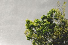 (Jon-Fū, the写真machine) Tags: jonfu 2017 olympus omd em5markii em5ii em5mkii em5mk2 em5mark2 オリンパス mirrorless mirrorlesscamera microfourthirds micro43 m43 mft μft マイクロフォーサーズ ミラーレスカメラ snapseed japan 日本 nihon nippon ジャパン ジパング japón जापान japão xapón asia アジア asian orient oriental aichi 愛知 愛知県 chubu chuubu 中部 中部地方 nagoya 名古屋 partialcolor green outdoors 野外 nature 自然 plant plants 植物 flora tree trees 木 木々