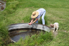 Margie & Rocky (twm1340) Tags: june 2017 rv motorhome trip tour travel petersburg ne nebraska boone county stevensons lake dog margie shihtzu artesian well water spring