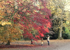 IMG_4489-002 (Gregorian-Emporium) Tags: westonbirt trees autumn fall beautiful mother daughter photo arboretum