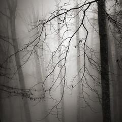 Light in the forest X (ilias varelas) Tags: fog forest field blackandwhite nature mood mono monochrome mist mountain ilias light landscape land atmosphere varelas exposure greece trees