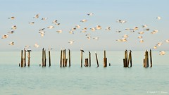 O voo (Vanderli S. Ribeiro) Tags: voo garças aves birds água lagoadospatos sãolourençodosul natureza aoarlivre céu paisagem vanderlisr vanderlisribeiro nikon