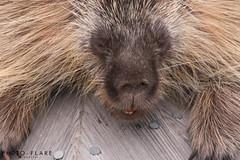 alaska toutr day 5 (3 of 18) (Photo-Flare) Tags: alaska ny newyork personalvacationphotographer phototours photographyfortravelers vacationphotographer wildlifephotographers honeymoonideas