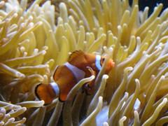 IMG_0246 (Alejandro Perez M.) Tags: medellin parqueexplora acuario