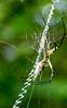 Morning_Chow (briarphotos) Tags: briarphotos nikon nikon18200mm spider