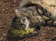 Smile on Saturday #preciouspets (Argentarius85) Tags: nikond5300 sigma105mmf28exdgoshsm cat katze tier animal portrait natur smileonsaturday preciouspets