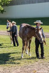JBC_8103.jpg (Jim Babbage) Tags: krahc annualshow appaloosa horses
