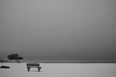 Newport Beach Bench. (Livia Lopez) Tags: nature snow beach bench rock newport rhodeisland solitute blackandwhite bw blancoynegro noiretblanc solitude nieve soledad piedra naturals naturaleza playa banco tree árbol