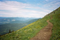 Dog Mountain, Washington. 5.18.17. (Nothing Signified) Tags: dogmountain washington mountain skamaniacounty dogmtn dogmountainwashington dogmountainwa trail mountainside hike hiking columbiarivergorge pacificnorthwest hikers mountainhiking beautifulnature nature landscape hillsidetrail columbiariver thegorge olympusxa kodakportra160 portra160 kodakportra portra kodak kodakfilm olympusxaphotos danwatsonphotography nothingsignified olympusxalandscapephotos america washingtonstate topographics democraticforest analogphotography filmphotography analoguephotography filmphotos analoguephotosofnature mountainlandscapephotos olympusxaphotography kodakportrafilmphotos columbiarivergorgephotos hikinginwashington mountainhikers mountainhikephotos exploration trailsonmountains pacificnorthwesthike pacificnorthwestnaturehike pacificnorthwestnature americanlandscape landscapesofamerica mountainlandscape windingtrail pacificnorthwestonfilm natureonfilm landscapesonfilm rangefinder fixedlens filmlandscape analoglandscape analoguelandscape windingpath naturepath pacificnorthwesthiking mountainsidehiking