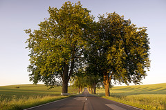 Chestnut Avenue (Bernd Schunack) Tags: chestnut avenue tunnel under trees sunset fantastic light spring green fields acre country road perspective lumix gx1 mecklenburgvorpommern germany