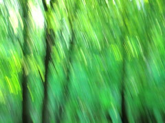 the beginning of summer XI (vertblu) Tags: green greens shadesofgreen icm intentionalcameramovement forest foliage abstraction abstractlandscape moody mood freshgreen fresh inthewoods intothewoods brushstrokes vert vertblu grün hellgrün blur blurry blurred
