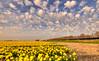 Seven giant cloud cutters in a row. (Alex-de-Haas) Tags: 1635mm d750 dutch dutchskies hdr holland hollandseluchten lowcountries nederland nikkor nikkor1635mm nikon nikond750 noordholland thenetherlands avond beautiful bloemen bloemenbijeenkomst bloemenveld bloemenvelden bright daffodil daffodils daglicht daylight depthoffield evening field flower flowerfields flowerbed fullframe highdynamicrange kleurrijk laagland landscape landscapephotography landschap landschapsfotografie lente licht light lucht luchten mooi narcis narcissen narcissus nature natuur overdag plant polder serene skies sky spring sun sundown sunny sunset tripod zon zonnig zonsondergang tomline10 000