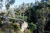20170709-15-Bluff River Gorge walk (Roger T Wong) Tags: 2017 australia bluffrivergorge buckland rogertwong sel1635z sony1635 sonya7ii sonyalpha7ii sonyfe1635mmf4zaosscarlzeissvariotessart sonyilce7m2 tasmania bushwalk caves cliff erosion gorge hike outdoors sandstone tramp trek walk
