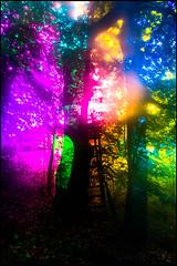 20170605-101 (sulamith.sallmann) Tags: natur pflanzen baum blur bunt bäume colorful effect effekt filter folientechnik nature plants tree unscharf brandenburg deutschland deu sulamithsallmann