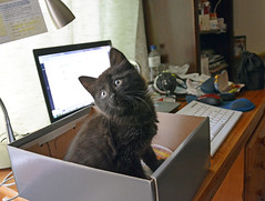 July 2016 (Caulker) Tags: kitten vaska desk shoebox july 2016