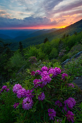 The Glow on the Rhododendrons  in Blue Ridge Parkway - 2267 (J & W Photography) Tags: 2017 appalachia blueridgeparkway catawbarhododendron jwphotography june northcarolina tennesse blossom clouds dusk flameazaleas flower grass landscape nature plantappalachiamountains rhogodendron sunset tree