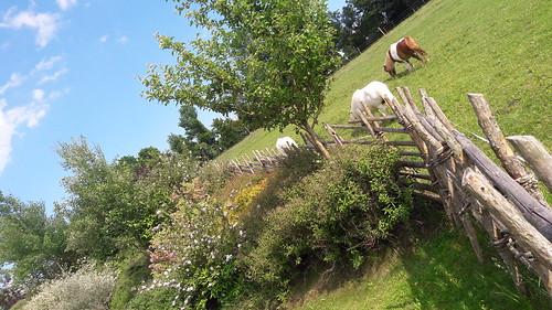 Ponykoppel direkt neben den Ferienhäusern