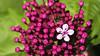 Fleur (Guillaume_photo) Tags: ales fleur gard macro pentax k20d 100mm
