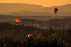 Balloons flying over Tualatin River Valley (leighchen) Tags: morning oregon ridgelines forest colorful goldenhour fog sunrise lansscape hotairballoon mountain valley balloons