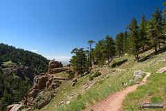 Bridle Trail (kevin-palmer) Tags: laramiemountains caspermountain casper wyoming june spring summer sunny blue sky nikond750 tamron2470mmf28 circularpolarizer trail path bridletrail rotarypark pine trees forest