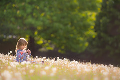 Dandelion Girl (Philocycler) Tags: child dandelion spring pretty sun backlight childphotography bokeh light cute canon canon5dmarkiii ef200mmf28liiusm chicagoist chicagomuseumcampus