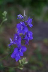 Garden flowers (yve_all) Tags: blumen flowers gartenblume gardenflowers natur nature licht light farben colours blickwinkel view
