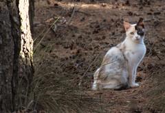 Gato salvaje //  Wild cat (Cazadora de Fotos) Tags: wild cat gato salbaje campo trees arboles bosque mirada felinos mascotas