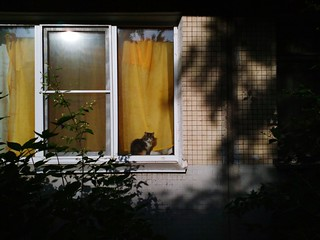 Городской пейзаж Animal Themes Cityscape Photography City Life Window EyeEmNewHere