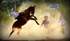 Rafael Cardoso (Eduardo Amorim) Tags: gaúcho gaúchos gaucho gauchos cavalos caballos horses chevaux cavalli pferde caballo horse cheval cavallo pferd crioulo criollo crioulos criollos cavalocrioulo cavaloscrioulos caballocriollo caballoscriollos pampa campanha fronteira uruguaiana riograndedosul brésil brasil sudamérica südamerika suramérica américadosul southamerica amériquedusud americameridionale américadelsur americadelsud cavalo 馬 حصان 马 лошадь ঘোড়া 말 סוס ม้า häst hest hevonen άλογο brazil eduardoamorim jineteada gineteada