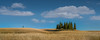 Italy - The cypresses of Tuscany (Toon E) Tags: 2017 italy tuscany sanquiricodorcia valdorcia trees cypress cypresses valley panoramic sony 7rm2 zeiss sonyfe2470mmf4 outdoors travelhay clouds