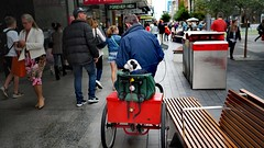 Dog with wheels (Ross Major) Tags: dog wheels bike street adelaide rundle mall south australia 17mm 18
