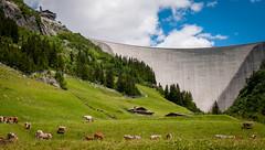 073_  Zillergründl (wenzelfickert) Tags: umgmayrhofen landschaft zillergründl zillertal zillertaleralpen kühe tiere tirol dam staumauer hütten huts wiese meadow landscape animals cows wandern hiking berge mountains österreich austria wanderweg trail