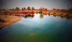 Lake of Love (Jonathan Schultheis) Tags: lake lago tree natural entrerios naturally argentina holidays