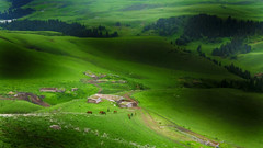 beautiful shadows (Maluka.X) Tags: shadow light scenery view grass land green wet life live nature landscape travel summer morning dusk float tree xinjiang china amazing country countryside village vacation