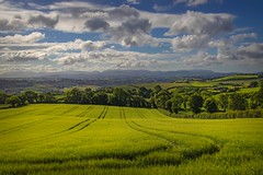 Barley in the meadow (Alan10eden) Tags: barley crop july springbarley green view landscape undulating hills mountains mournes northernireland ulster newry countyarmagh agriculture cropping tillage rotation arable field tramlines bluesky clouds alanhopps canon 80d sigma 1770mm trees cereal awns tiller