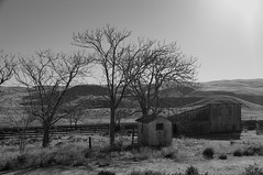 The Scene Of The Crime (nedlugr) Tags: california ca carrizoplain carrizoplainnationalmonument usa trees fence fences shed barn hills shadows sanluisobispocounty ruraldecay ruralwest rural americanwest