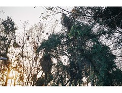 drms (jonypepenacho) Tags: nikon nikonfg fg nikonchile 50mm 50mmlens nikonlens nikkor nikkorlens nikonistas chile santiago analogue analogo analoga film c200 fuji fujicolor chilefilm paisaje fujifilm filmnotdead