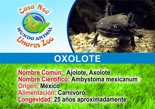 oxolote