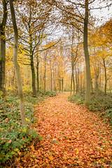 D'accord pour la promenade ... (musette thierry) Tags: musette thierry paysage brunehaut belgique europe automne orange allée d600 nikon reflex invitation